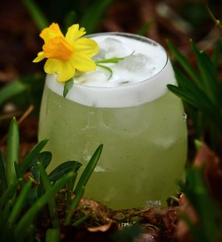 Daffodill Sour spring cocktail with dill aquavit